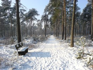 Wanderweg im Winter